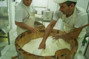 La lavorazione del latte al caseificio