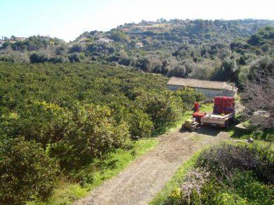 Azienda Agricola Alesci